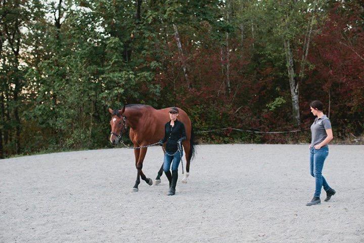 Kara performing gait analysis on Turbo